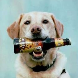 DogBeer250