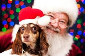 Santa and pet