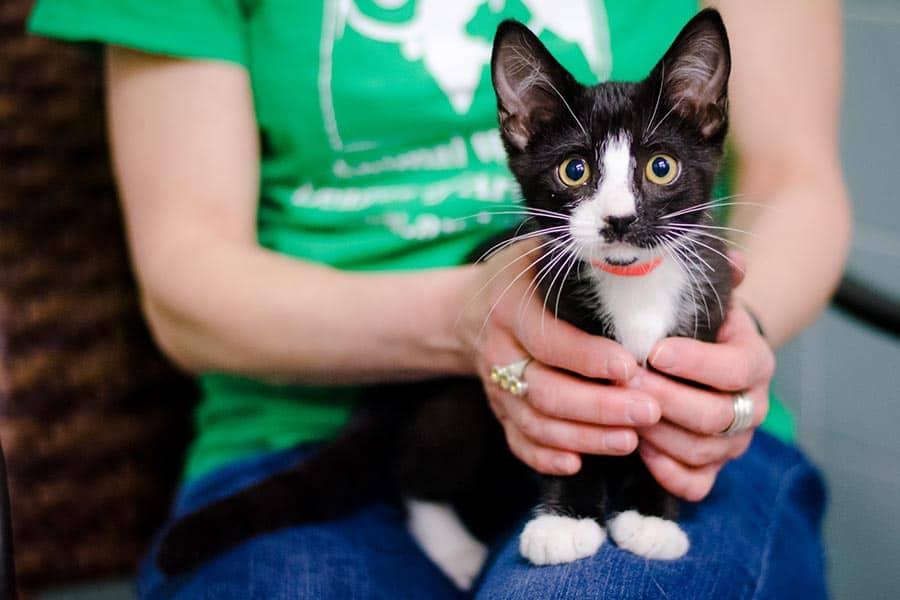 kitten-college-lap