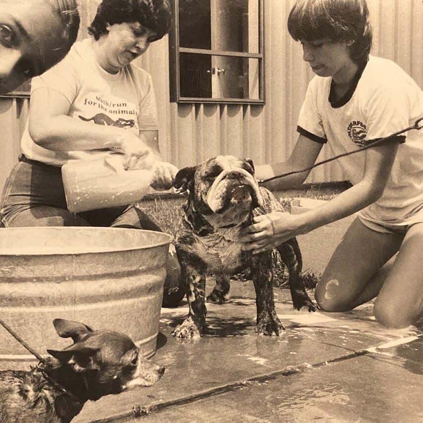 awla-historical-dog-bath
